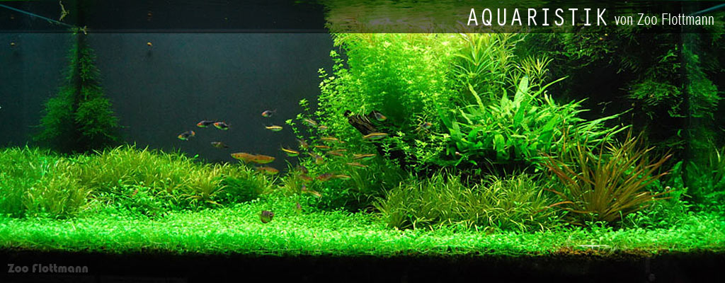 Aquaristik und Aquascaping