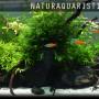 aquaristik2