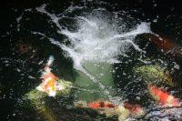 Teich-Belüftung